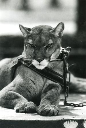 Shasta III served from 1965 til 1977