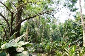 Jungle 1 - Mayan City 0