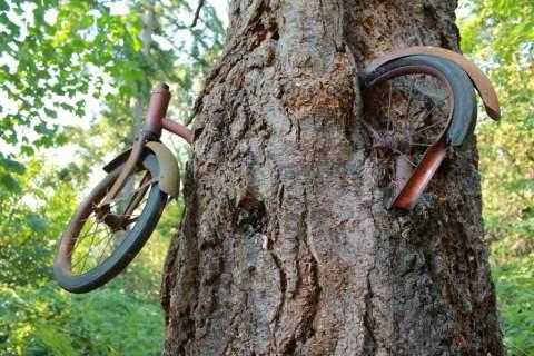 Bike in Tree on Vashon Island