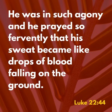 He was in such agony and he prayed so fervently that his sweat became like drops of bloodfalling on the ground.