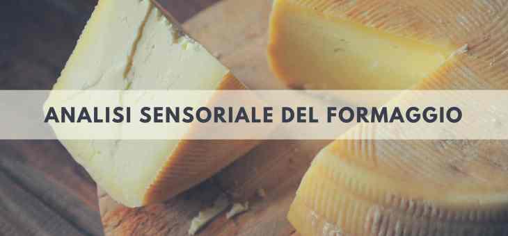 L'esame gusto olfattivo del formaggio nell'analisi sensoriale
