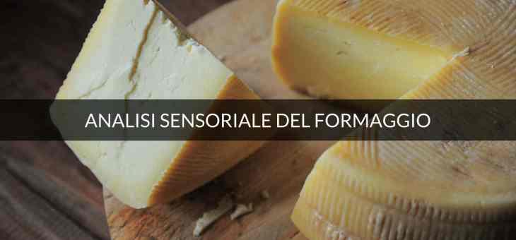 Descrittori finali nell'analisi sensoriale del formaggio.