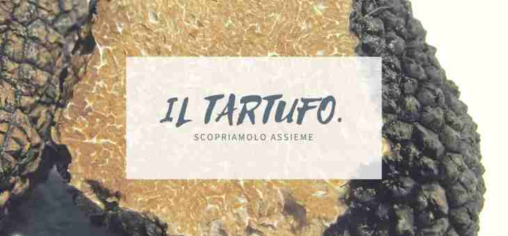 Scopriamo il tartufo bianco per la fiera di Sant'Agostino, Ferrara