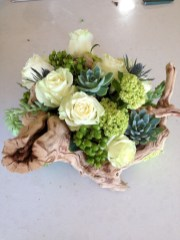 Ideas to arrange your succulent with driftwood 01