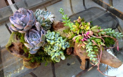 Ideas to arrange your succulent with driftwood 05