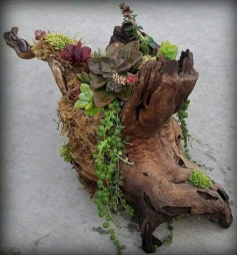 Ideas to arrange your succulent with driftwood 18