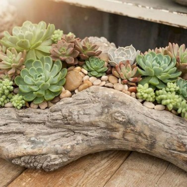 Ideas to arrange your succulent with driftwood 22