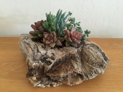 Ideas to arrange your succulent with driftwood 46