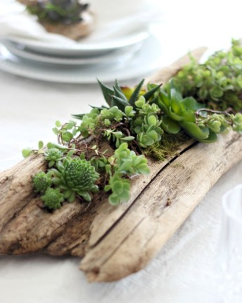 Ideas to arrange your succulent with driftwood 54