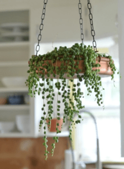 Indoor hanging planters you can make yourself 11