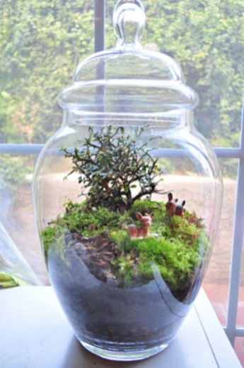 Amazing ways to planting terrarium 21