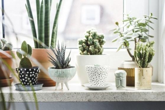Amazing ways to planting terrarium 28