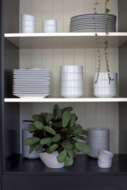 Best indoor plants you can grow without care 02
