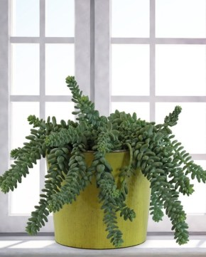 Best indoor plants you can grow without care 09