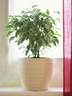 Best indoor plants you can grow without care 12