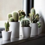 Best indoor plants you can grow without care 22