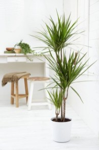 Best indoor plants you can grow without care 23