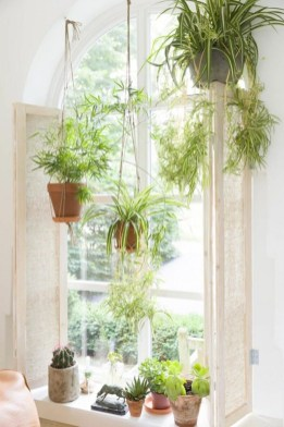 Best indoor plants you can grow without care 28