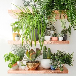 Best indoor plants you can grow without care 32