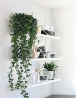 Best indoor plants you can grow without care 41