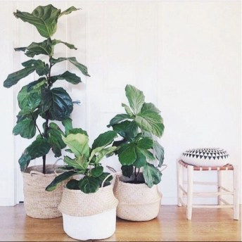 Best indoor plants you can grow without care 43