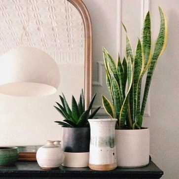 Best indoor plants you can grow without care 50