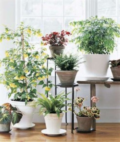 Best indoor plants you can grow without care 57