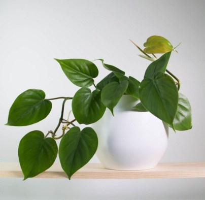 Best indoor plants you can grow without care 60