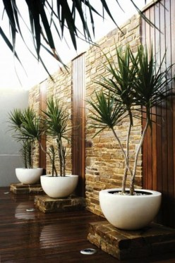 Best indoor plants you can grow without care 61