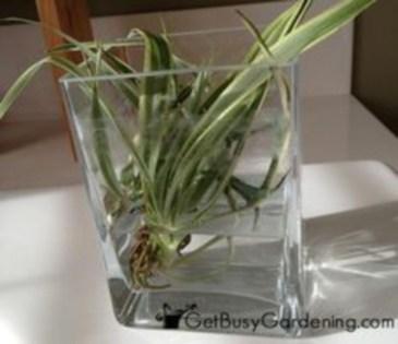 Diy indoor container water garden ideas 15