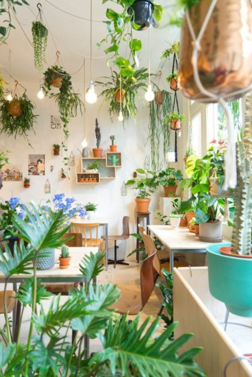 Great ideas to display house plants in living room