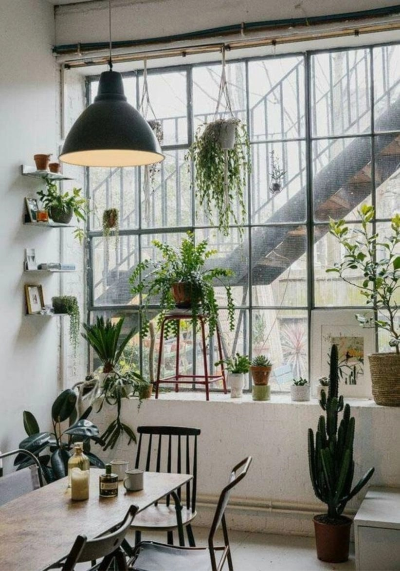 Industrial indoor plants your home