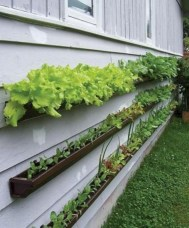 Diy hydroponic gardens for your small house 17