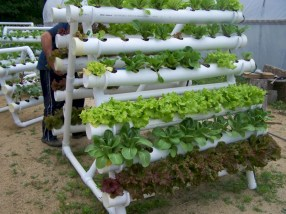 Diy hydroponic gardens for your small house 26