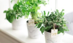 Great indoor herb garden ideas for healthy life 31