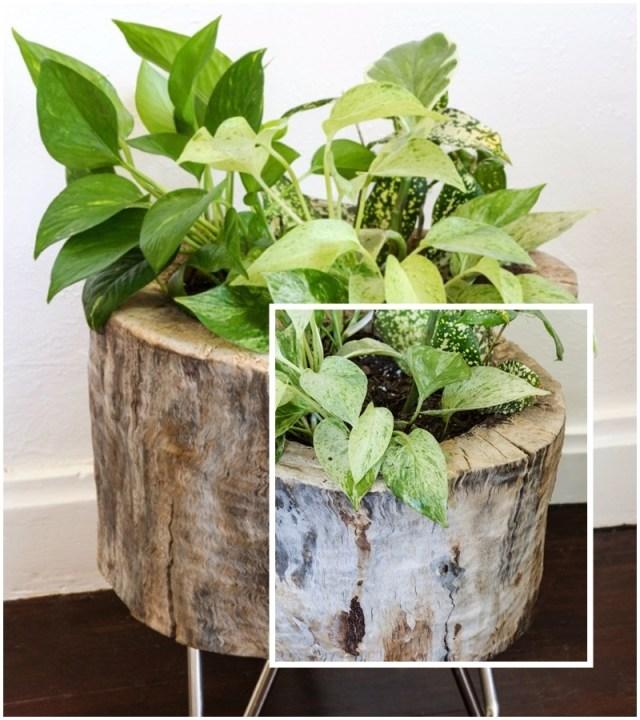 modern tree stump planter