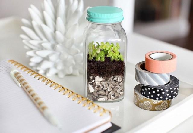 Adorable spice jar terrariums