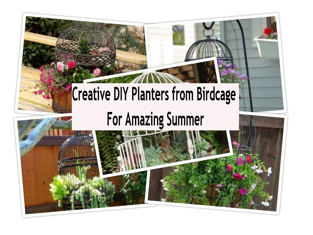 Creative diy planters from birdcage