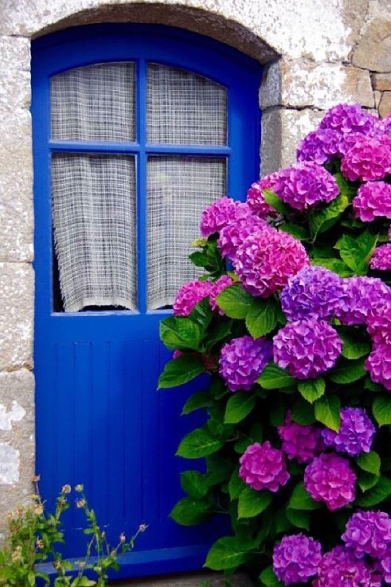 Hydrangea doorway
