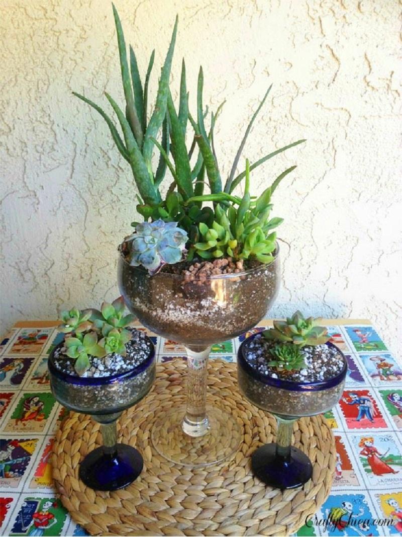 Margarita glass cactus garden