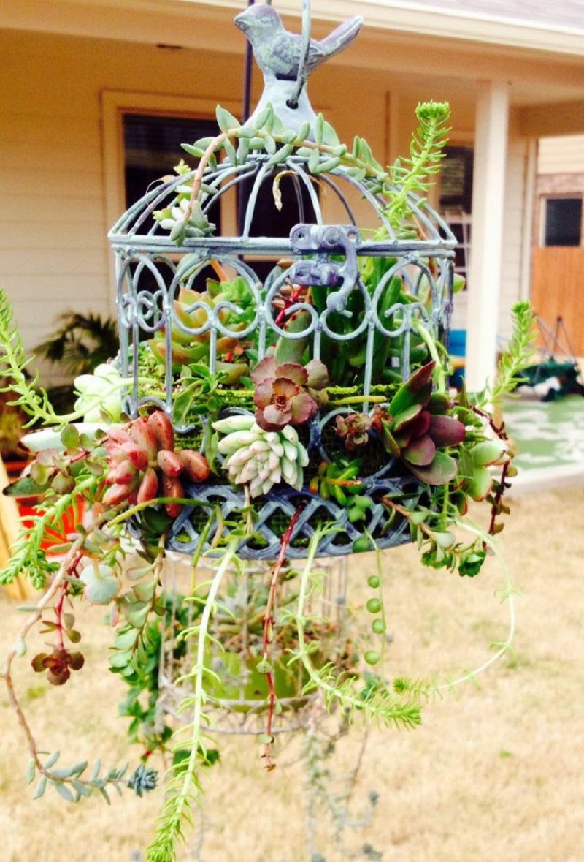 Mini-garden within a birdcage planter