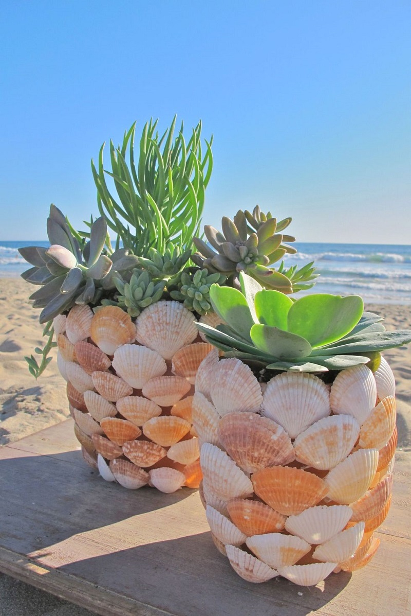 Sea shells succulents