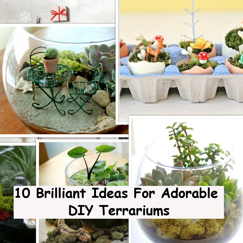 10 Brilliant Ides For Adorable Diy Terrariums Godiygo Com