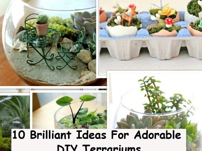 Simple ideas for adorable terrariums