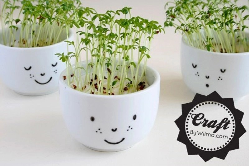 Diy cress cups with a face