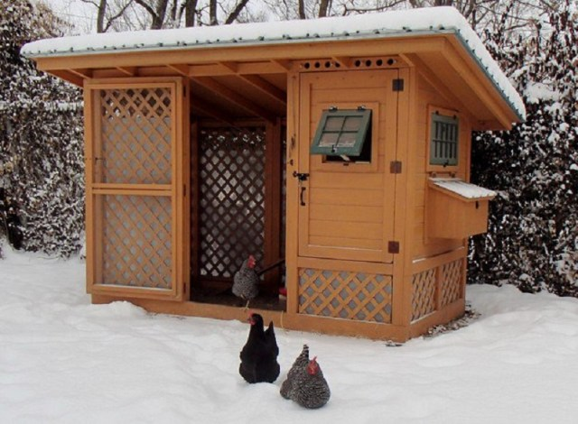 Chicken coop cabin