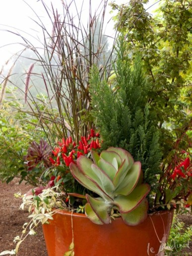 Beautiful and incredible fall succulent ideas 08