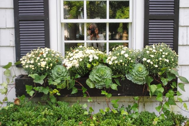 Cheap and easy fall window boxes ideas 23
