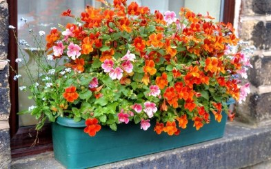Cheap and easy fall window boxes ideas 36