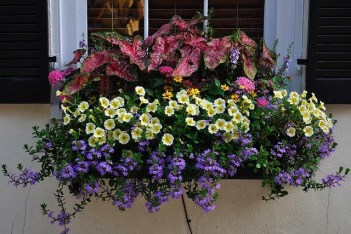 Cheap and easy fall window boxes ideas 50